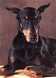 "My Echo's Black Watch CD ""Ember""